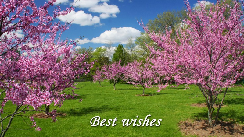 Best Wishes Tree Blossoms